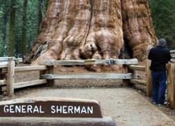 El ser vivo con mayor biomasa en la Tierra