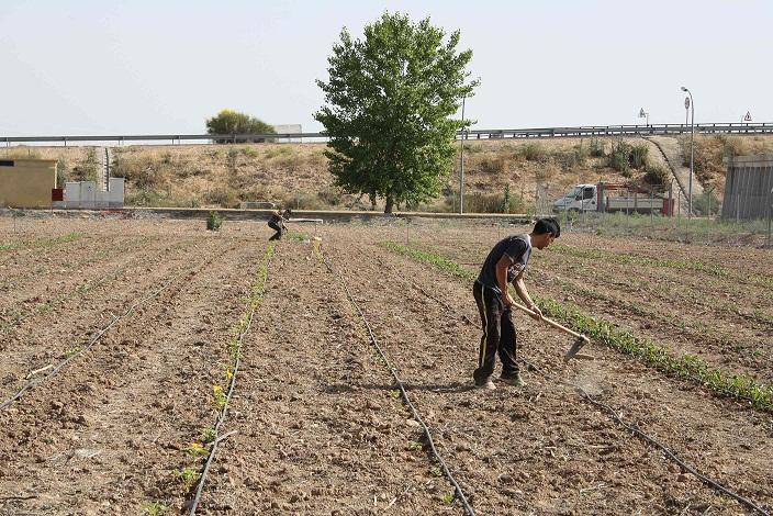 Torralba de Calatrava acoge hasta el 18 de octubre las primeras Jornadas de Alimentación Ecológica y de Proximidad