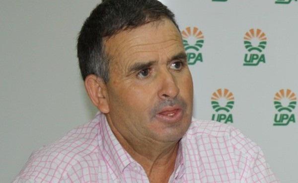 Según UPA la cosecha de aceituna en La Solana puede disminuir un 70 %
