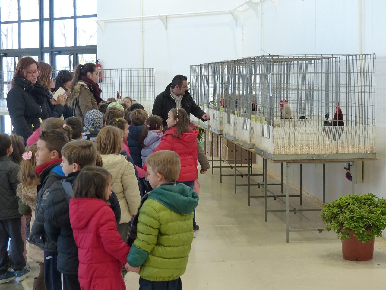 Más de 800 aves se exhiben en la I Feria Ornitológica de Manzanares