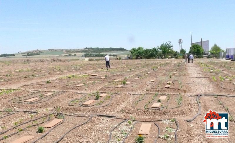 mercadillo agroecológico