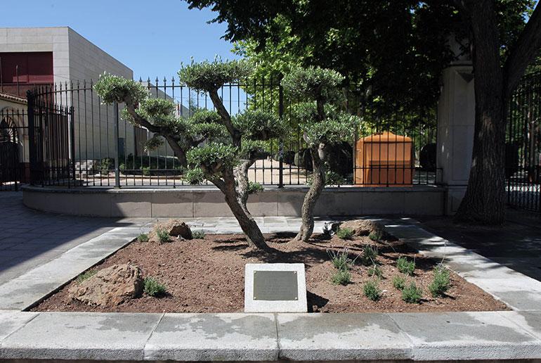 El Ayuntamiento planta un olivo a la entrada del Parque Gasset coincidiendo con el Día Mundial del Medio Ambiente