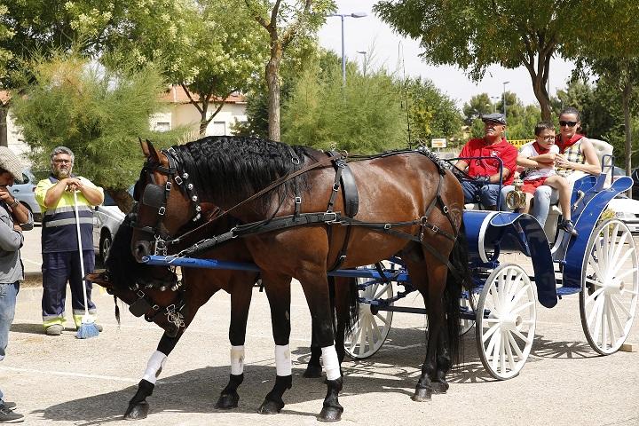 Los vecinos de Manzanares aprenden las curiosidades del caballo