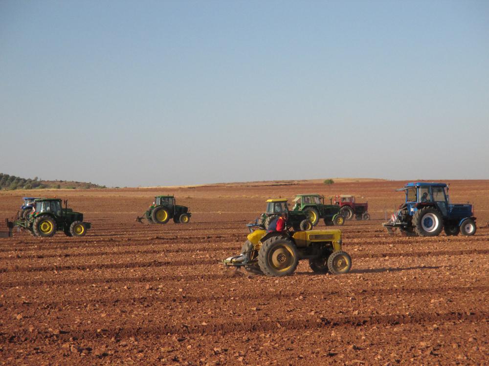 día del agricultor en Campo de Criptana
