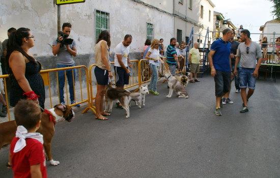 Elección del perro de San Roque