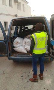 La Guardia Civil ha desarticulado una organización delictiva dedicada al hurto de aceituna