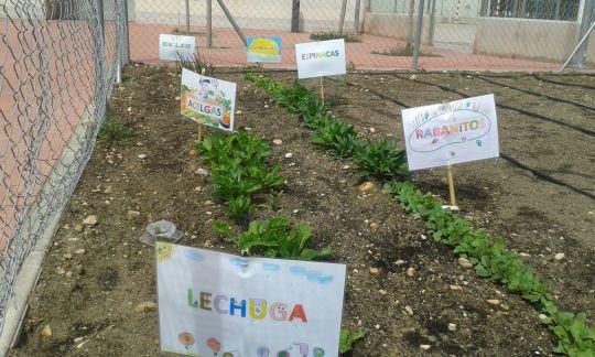 Cultivando plantas y valores en el huerto ecológico del colegio Carrasco Alcalde