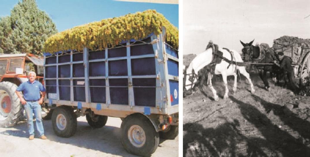 Ayer y el hoy del acarreo de la uva. Antes en carros de 1.000 kilos, ahora en remolques de 10.000