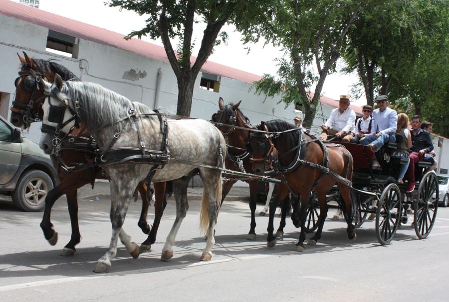 Una treintena de equinos participaron en las Jornadas Ecuestre-Flamencas