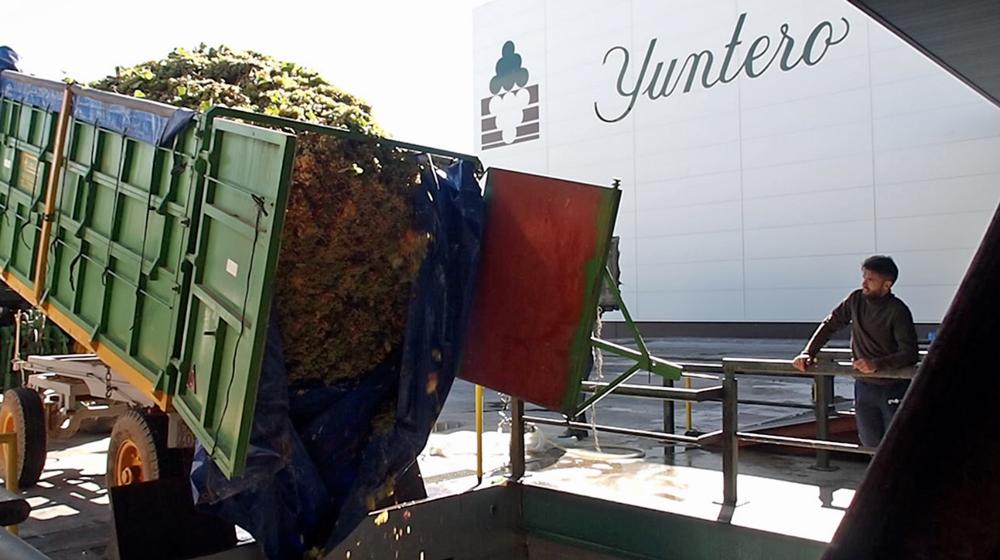Bodegas Yuntero finaliza la vendimia con una producción récord de 111 millones de kilos de uva