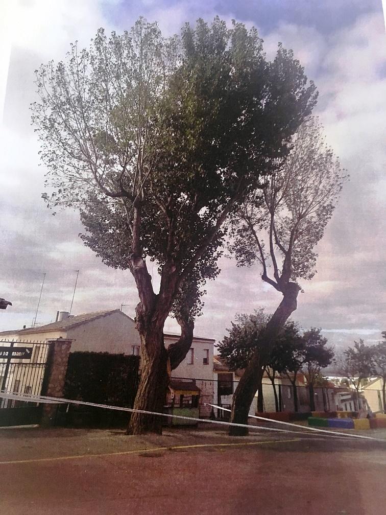 Campo de Criptana pone en marcha un plan para actuar sobre los árboles en mal estado del municipio