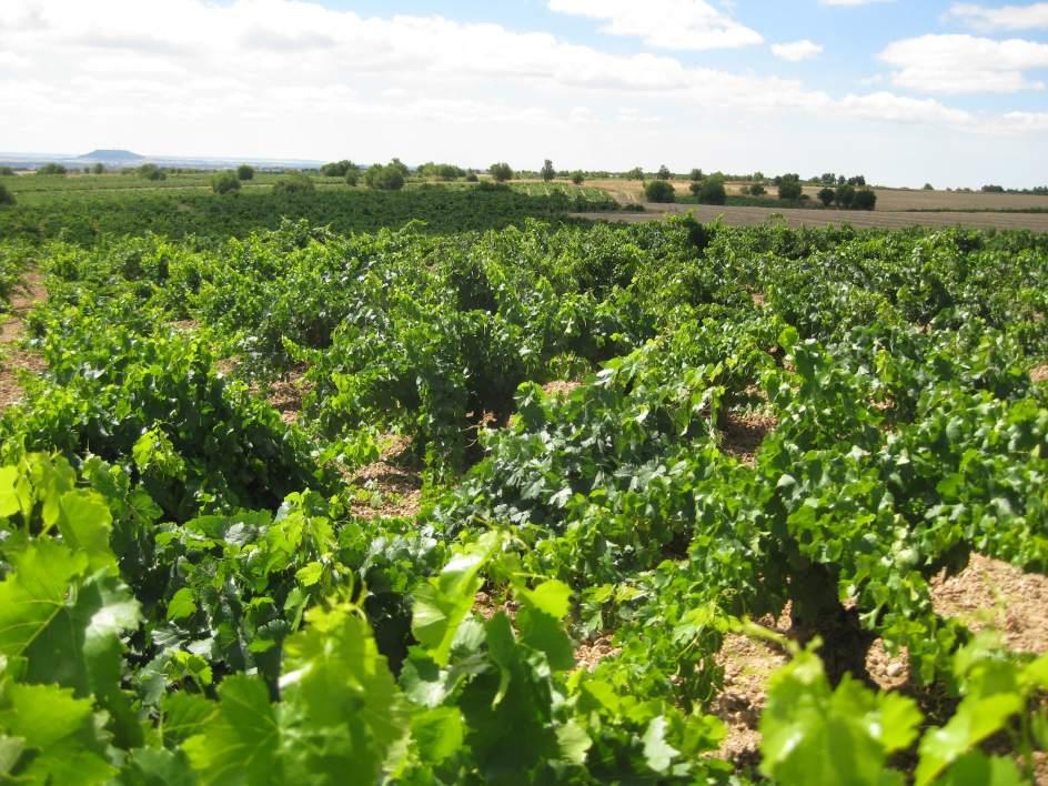 'Ciudad Ciencia' abordará en una conferencia en Valdepeñas el rendimiento del viñedo