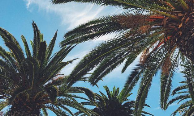 Las palmeras no son árboles, son hierbas