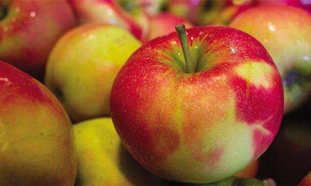 Lo que puede hacer una manzana podrida