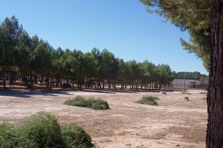 El Ayuntamiento de Herencia ilumina el pinar de La Serna en su 25 aniversario