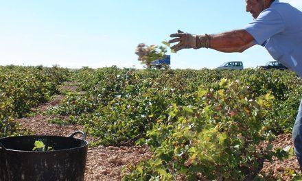 Alfonso Serrano: 'La subida de precios no cubrirá totalmente los gastos'