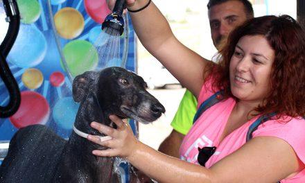 La Solana inaugura un novedoso lavadero de mascotas