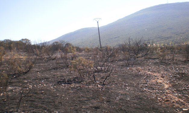 """Los técnicos valoran los daños causados por el incendio en el Paraje de """"El Bombo"""""""