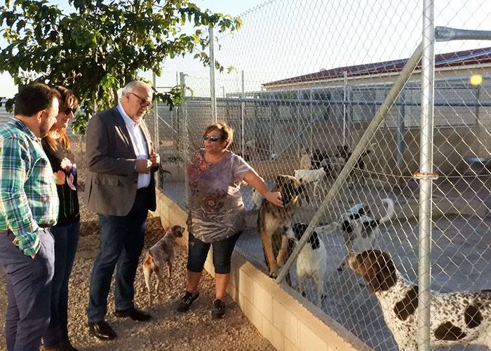 El Ayuntamiento está construyendo un refugio para gatos abandonados