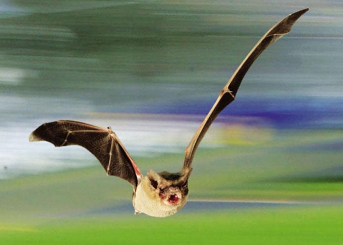 El vuelo más rápido