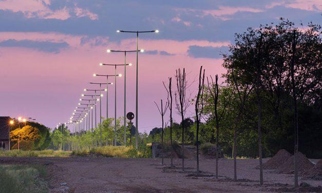 Más de doscientos árboles plantados esta primavera