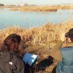 La laguna de Navaseca alberga más de 2.300 aves acuáticas de 23 especies diferentes