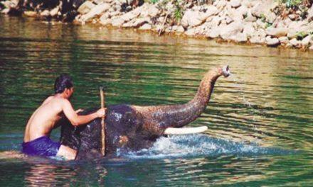 ¿Son los elefantes buenos nadadores?