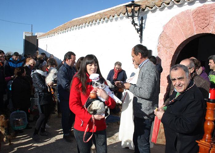 Más de 850 roscos, 80 litros de chocolate y 3 remolques de leña se emplearon en la fiesta de San Antón