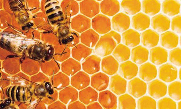 Sobre abejas y las celdas de los panales