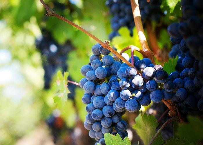 Aprobada la ampliación del rendimiento del viñedo en la DO Valdepeñas