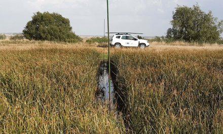 Arranca en agosto la segunda campaña de anillamiento de aves en paso posnupcial