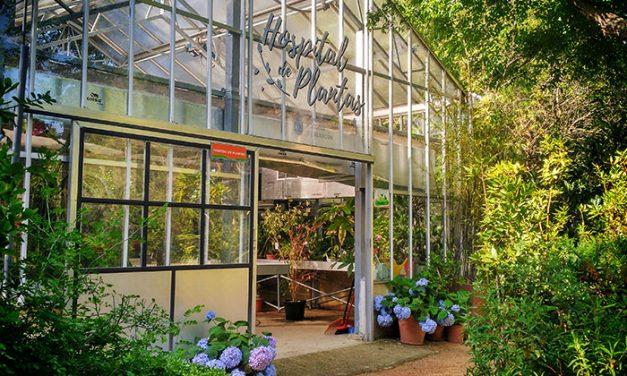 El Hospital de Plantas de Pozuelo atiende este verano cerca de un millar de ejemplares durante las vacaciones de sus propietarios