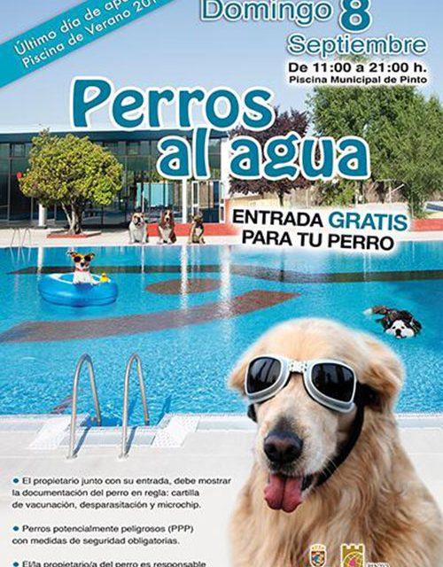 Perros al agua en el cierre de la temporada de piscina