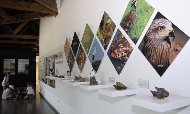 El Aula Medioambiental propone un otoño con rutas, talleres, cursos, conferencias y voluntariado