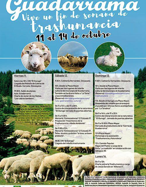 Guadarrama celebra este fin de semana la Fiesta de la Trashumancia
