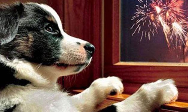 Consejos para disfrutar de una Fiesta de la Pirotecnia sin estrés para las mascotas