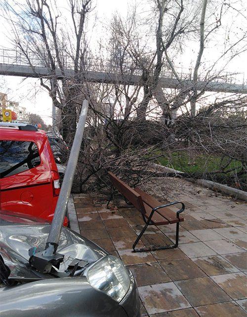 93 intervenciones de Policía Local, 80 de LYMA y 10 de Parques y Jardines durante el temporal