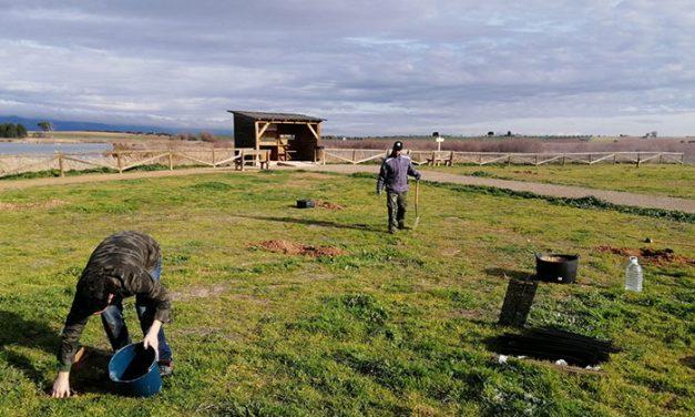 El Ayuntamiento de Daimiel planta una treintena de encinas en Navaseca