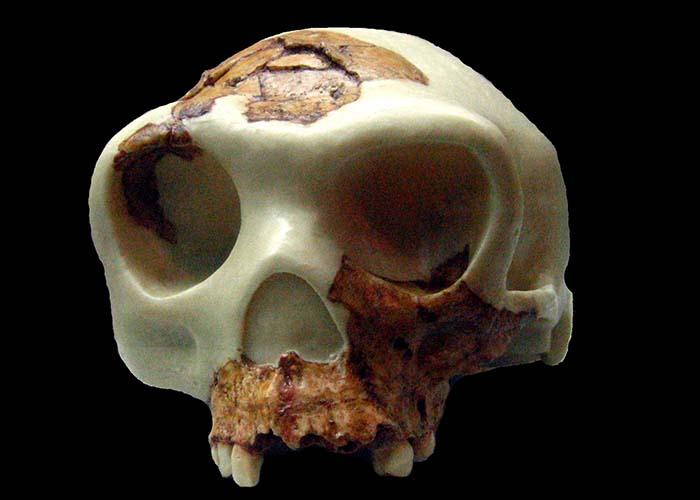 TEMA 1: Prehistoria de la Península Ibérica