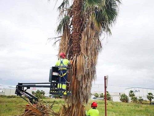 El Ayuntamiento de Jaén prosigue con su intensa labor para adecuar y mantener en condiciones óptimas el Parque Empresarial Nuevo Jaén