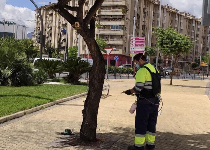 El Ayuntamiento de Jaén acomete el nuevo tratamiento de endoterapia contra la galeruca del olmo