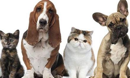El Ayuntamiento de Pinto adjudica el servicio de recogida de animales abandonados
