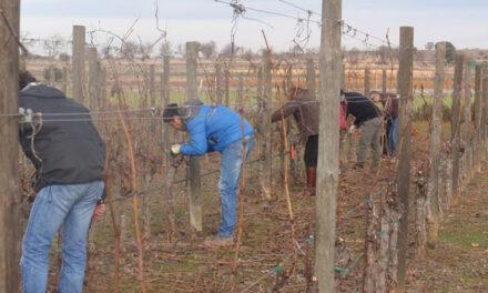 ALEF Getafe ofrece dos nuevos cursos de especialización agraria