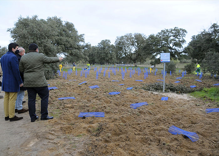 Boadilla plantará más de 30.000 árboles y arbustos para regenerar diversas zonas del monte