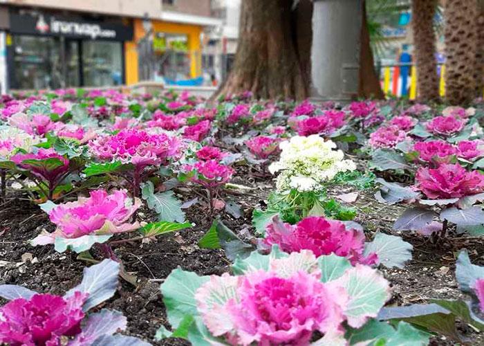 El Ayuntamiento de Jaén trabaja en la recuperación y organización de zonas verdes de las plazas de San Roque y Jardinillos
