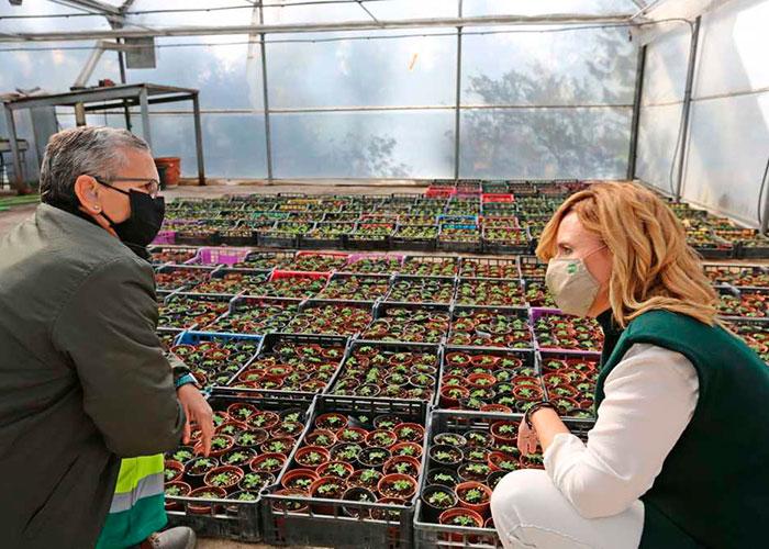 El Ayuntamiento de Jaén optimiza el rendimiento del Vivero Municipal hasta alcanzar una producción de 70.000 plantas en el último año para los jardines y zonas verdes