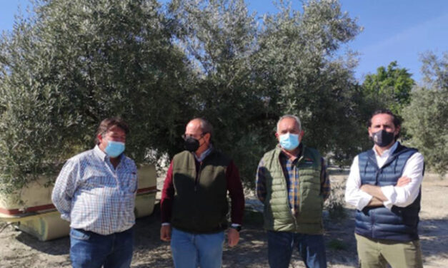Una veintena de personas participa en un curso práctico de poda del olivar en El Madroño