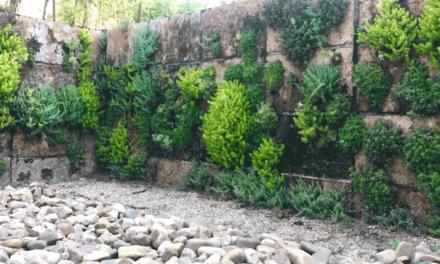 El Aula de Educación Ambiental, referente en jardinería vertical